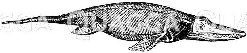 Ichthyosaurus (Jura) Zeichnung/Illustration