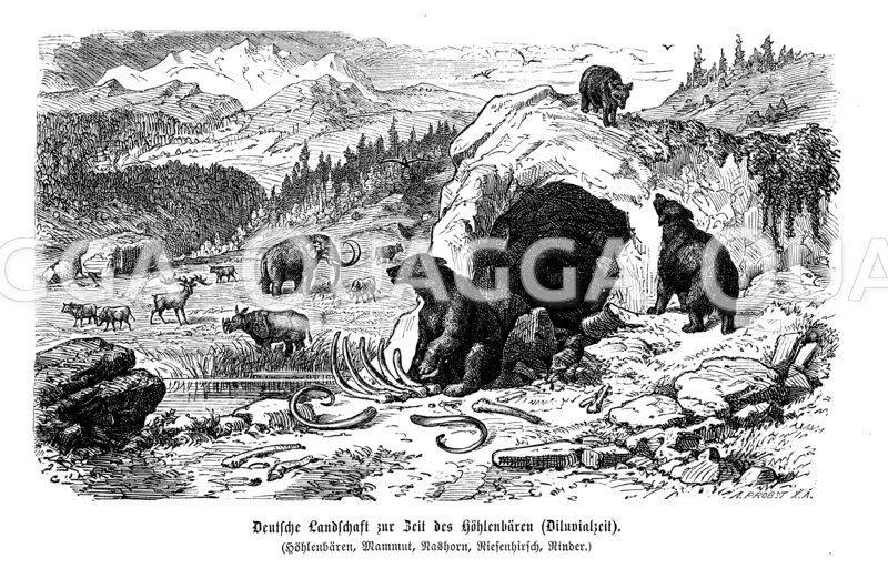 Deutsche Landschaft zur Zeit des Höhlenbären (Diluvium) Zeichnung/Illustration