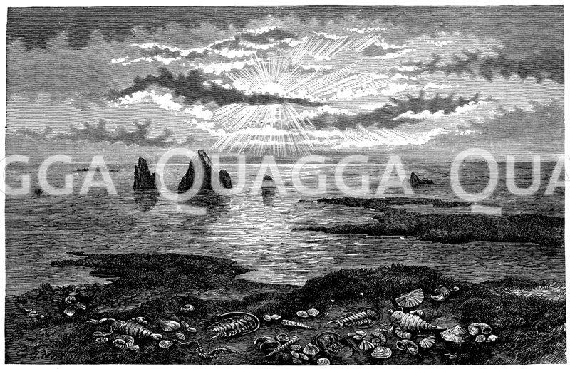Küstenlandschaft zur Silurzeit. Im Vordergrund Trilobiten und Riesenkrebse Zeichnung/Illustration