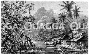 Kokospalmen und Mangroven aus Ceylon Zeichnung/Illustration
