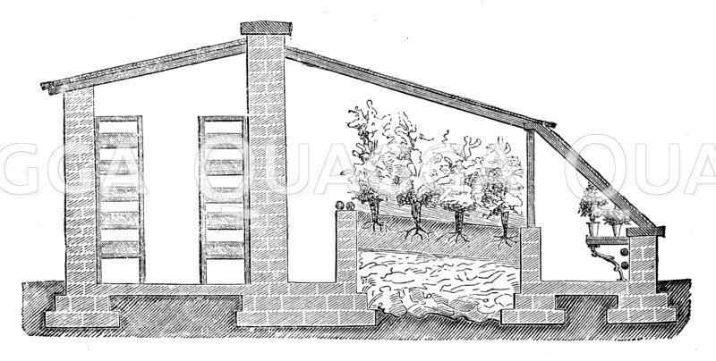 Obsttreiberei. Gewächshaus. Konstruktion. Eine kombinierte Anlage für Champignons