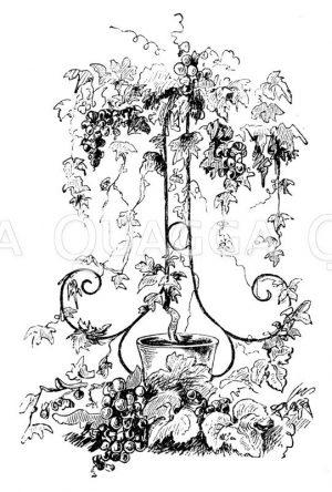 Tafeldekoration. Mit Trauben beladenes zierliches Drahtgestell