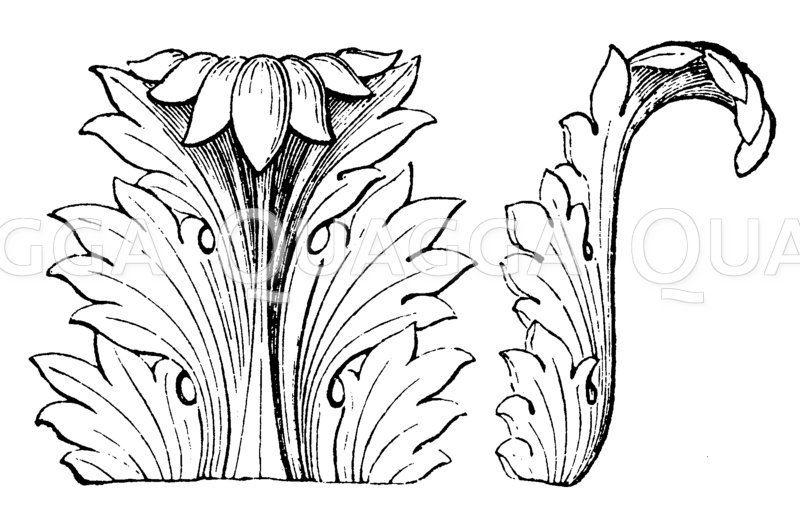 Akanthusornament Zeichnung/Illustration