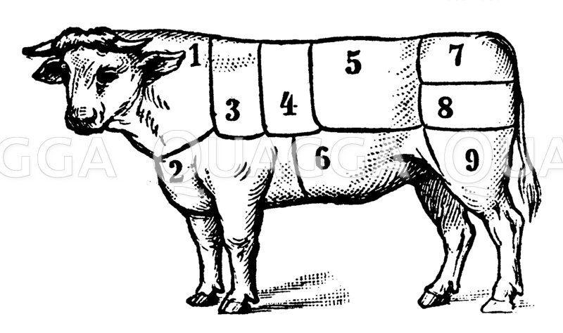 Rind: Fleischeinteilung Zeichnung/Illustration
