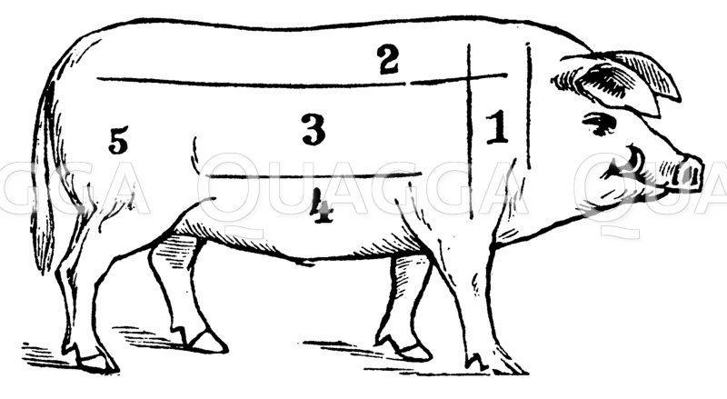 Schwein: Fleischeinteilung Zeichnung/Illustration