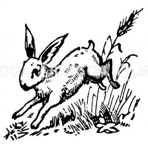 Springender Hase Zeichnung/Illustration