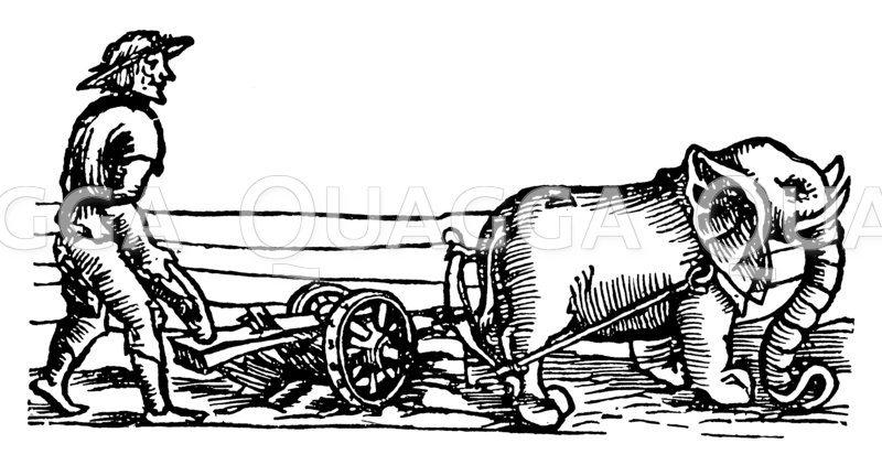 Pflügen mit einem Elefanten Zeichnung/Illustration