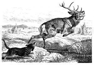 Hirsch wird von Jagdhund gejagt Zeichnung/Illustration