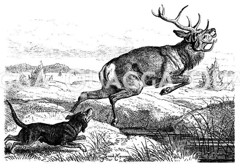 Jagdszenen