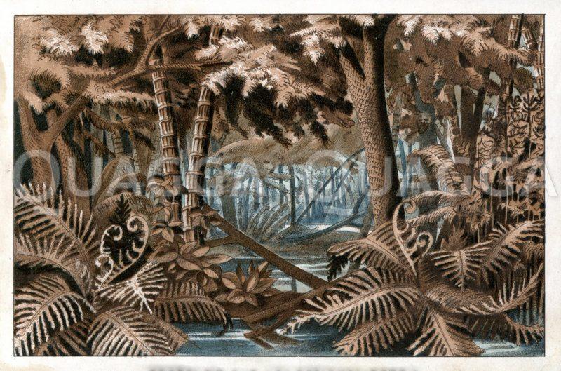 Landschaft aus der Steinkohlezeit (Karbon) Zeichnung/Illustration