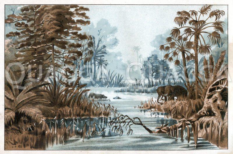 Landschaft aus der Braunkohlezeit (Tertiär) Zeichnung/Illustration