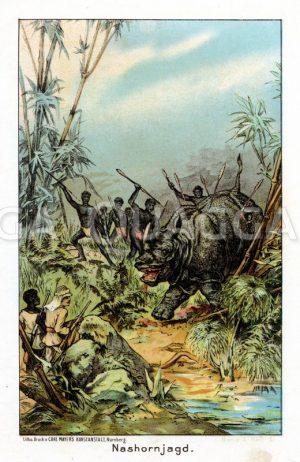 Nashornjagd in Afrika Zeichnung/Illustration