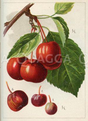 Beeren-Apfel