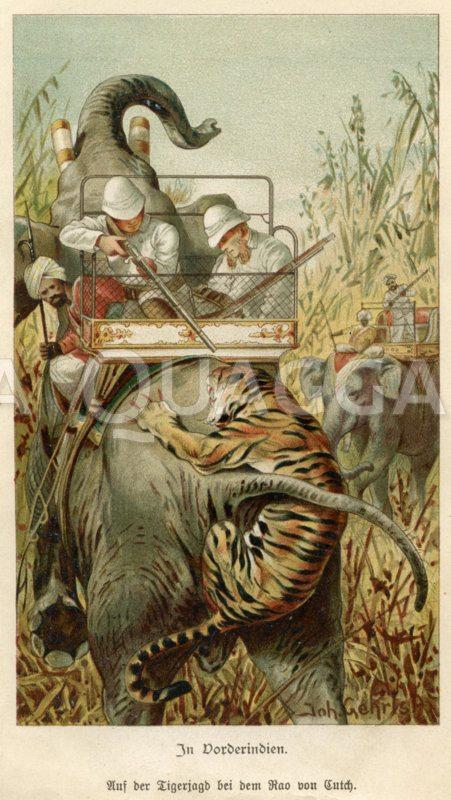 Tigerjagd in Vorderindien vom Elefanten aus Zeichnung/Illustration
