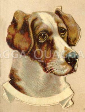 Jagdhund: Porträt Zeichnung/Illustration