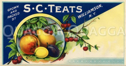 Etikett einer Obstkonservendose