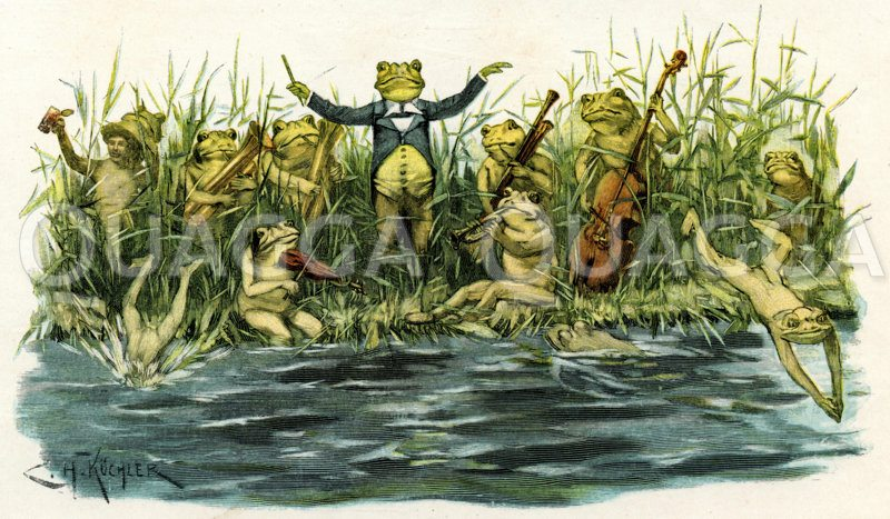 Frosch als Dirigent