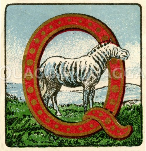 Quagga (Zebra): Reklamemarke Illustration