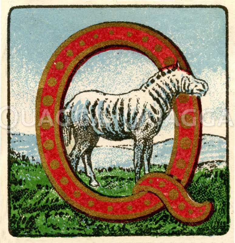 Quagga (Zebra): Reklamemarke Zeichnung/Illustration