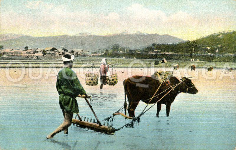 Japanischer Bauer beim Bestellen eines Reisfeldes mit einem Rind Zeichnung/Illustration