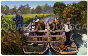 Kühe werden auf Spreewaldkähnen transportiert Zeichnung/Illustration