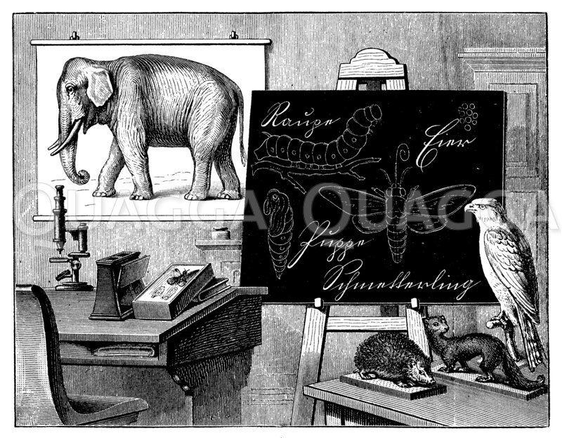 Lehrmittel für den naturwissenschaftlichen Unterricht über das Tierreich Zeichnung/Illustration