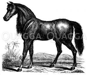Pferd Zeichnung/Illustration
