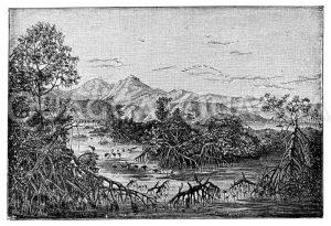 Südamerikanische Landschaft. Mangrovenküste in Venezuela. Mit Genehmigung des G. Hölzel Verlages in Wien Zeichnung/Illustration