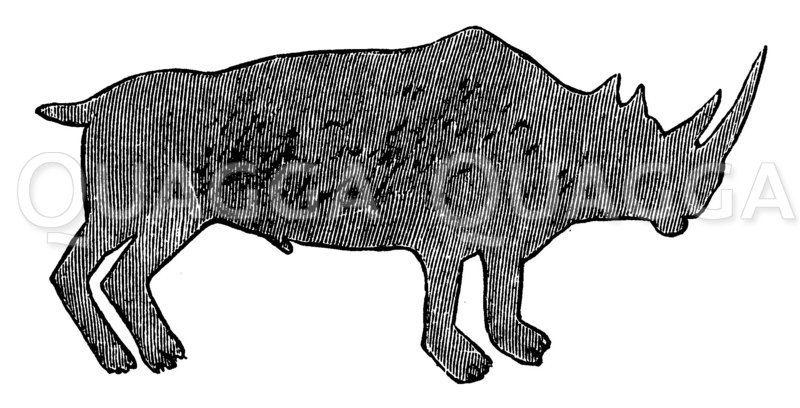 Nashorn: Zeichnung eines Buschmannes Zeichnung/Illustration