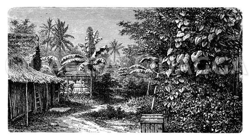 Kampong zu Buitenzorg auf Java Zeichnung/Illustration