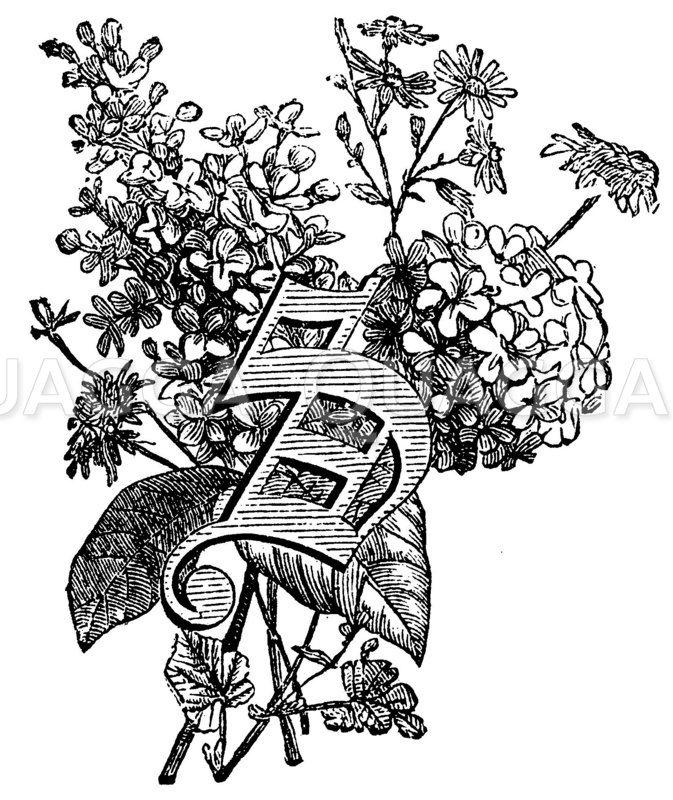 Buchstabe S Zeichnung/Illustration