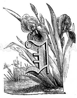 Buchstabe I Zeichnung/Illustration