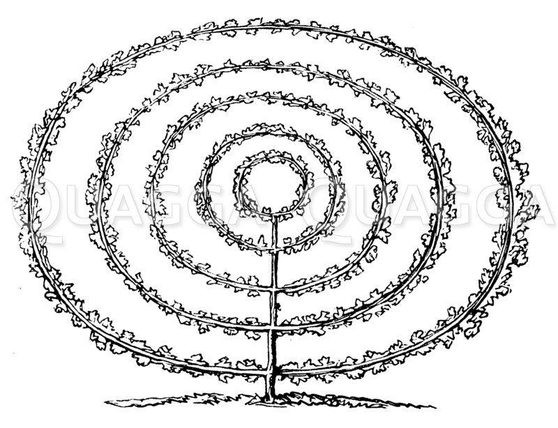 Kreispalmette
