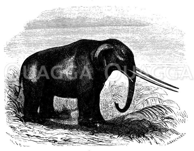 Mastodon Zeichnung/Illustration