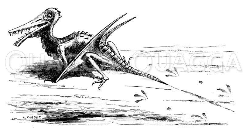 Ramphorrynchus Zeichnung/Illustration