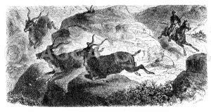 Jagd auf Kudus Zeichnung/Illustration