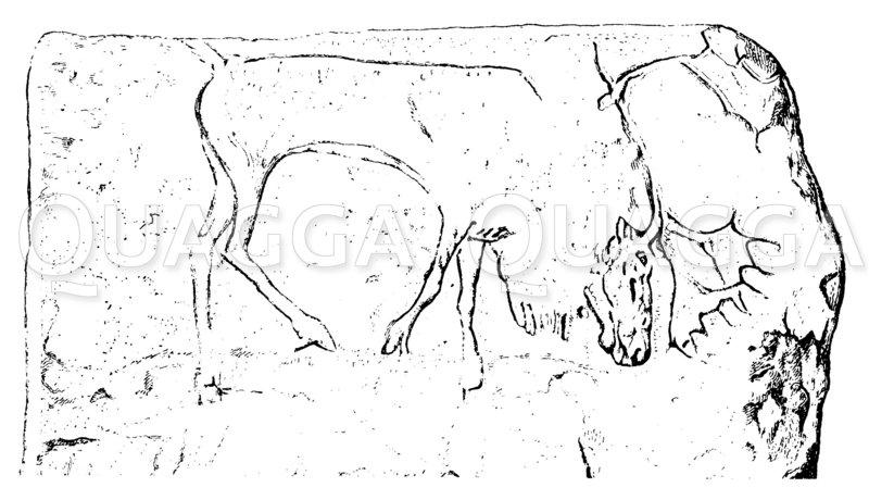 Renntier von Thaingen Zeichnung/Illustration