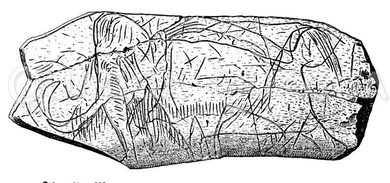 Mammut von La Madeleine Zeichnung/Illustration