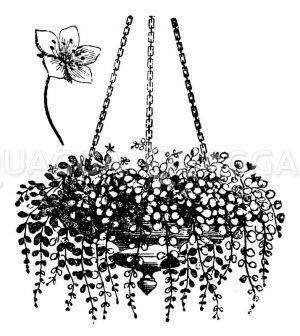 Blumenampel mit Gelbweiderich Zeichnung/Illustration