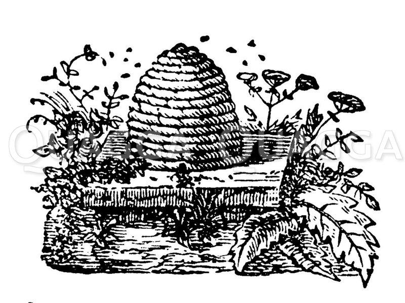 Bienenkorb Zeichnung/Illustration