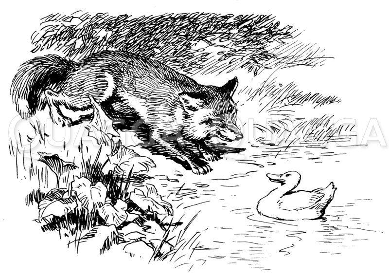 Fuchs und Ente Zeichnung/Illustration