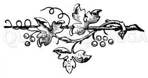 Vignette: Wein Zeichnung/Illustration