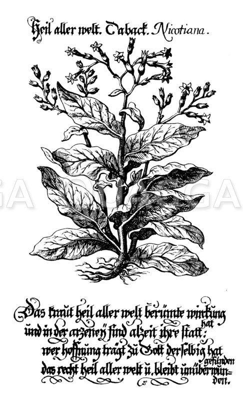 Tabak Zeichnung/Illustration