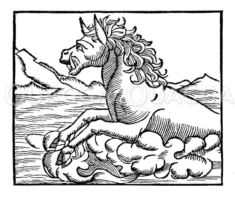 Hippopotamus Zeichnung/Illustration