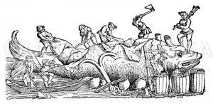 Abspecken eines Wales Zeichnung/Illustration