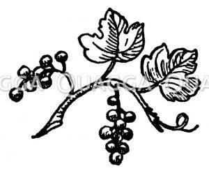 Vignette: Johannisbeere