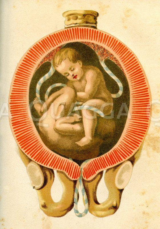 Zwillinge im Uterus