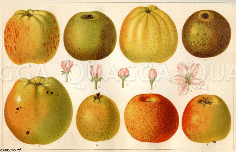 Alte Apfelsorten