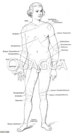 Umrisszeichnung eines Menschen mit eingezeichneten Knochenvorsprüngen