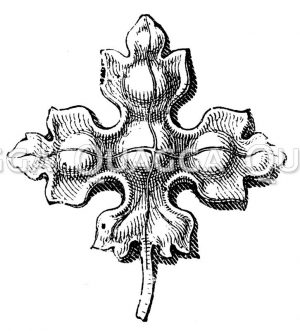 Kreuzblume